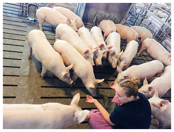 Ohio Pig Farm Visit in Clinton County, Ohio